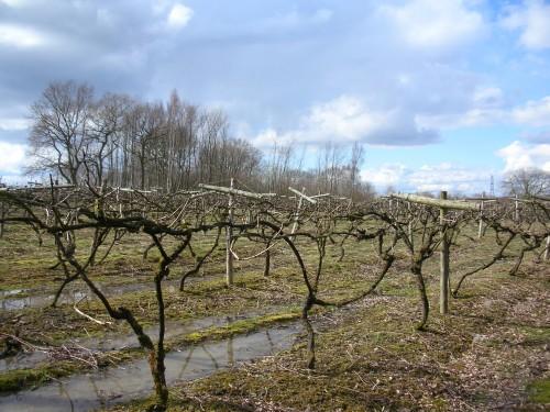 Carr Taylor vineyard