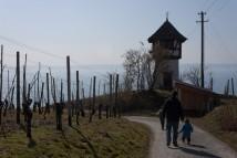 Munich Winerambler and Sons