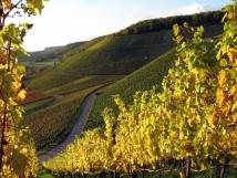 Stromberg vineyard