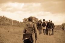In the vineyard, left behind