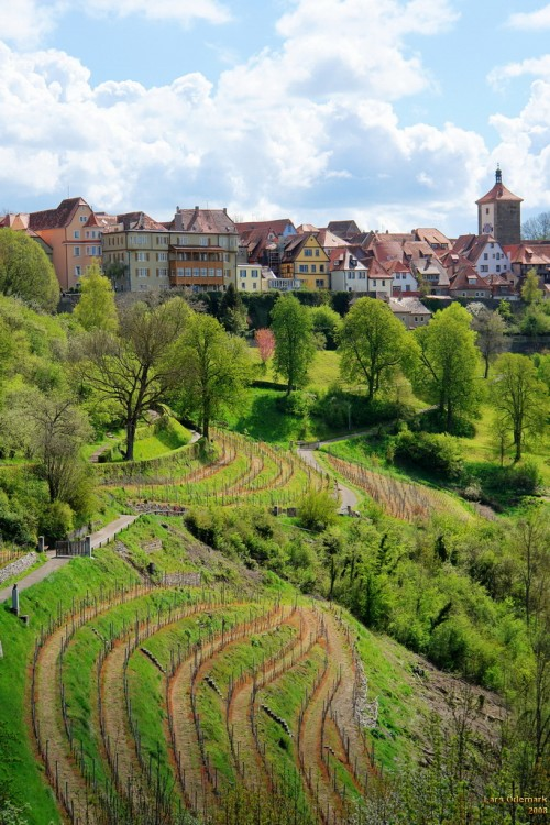 Vineyards beneath the city walls of Rothenburg. Photo by Lars Odemark, licensed cc by-nc-nd 2.0