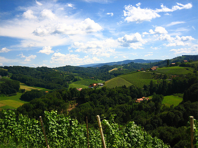 Steiermark vineyards