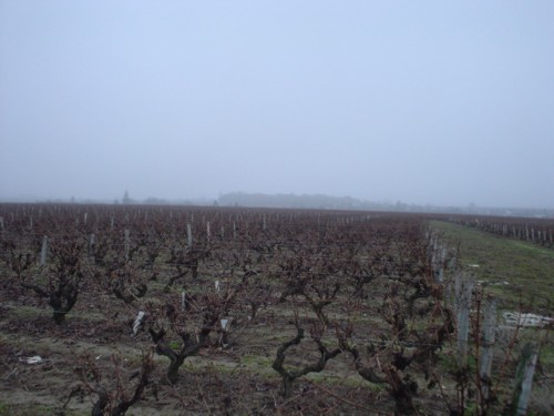 Vouvray vineyards looking suitably gloomy (for us having forgotten to take a photo of the bottle). Photo by celesteh, licensed CC BY 2.0