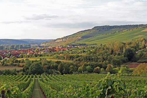 Franconian vineyards. Photo by voelker_wein, licensed CC Attribution-NonCommercial 2.0 Generic